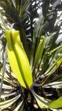 tropical Foto de archivo