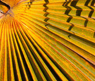 Tropical abstract Royalty Free Stock Photo