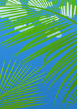 Tropical abstract background. With palms and sky royalty free illustration