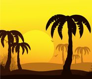 Tropical abstract background with palms Royalty Free Stock Photography