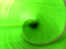 Tropical abstract spiral. Leaf deep abstract spiral. Green leaf. Deep leaf abstract background. Spiral leaf. Photo from the top of spiral leaf royalty free stock image
