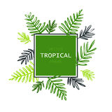 Tropical abstract vector border with palm leaves. Exotic tree foliage made in brush style with place for your text. Stock Images