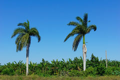 Tropical agricultural land Royalty Free Stock Images