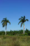 Tropical agricultural land Royalty Free Stock Photos