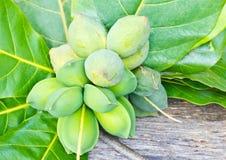 Tropical almond fruits Stock Photos