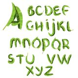Tropical alphabet made of banana palm leaves. Hand drawn green paradice abc. Natural summer letters. Vector design royalty free illustration