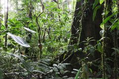 Tropical Amazon rain forest Colombia. Lush vegetation after the rain an exotic rainforest with big trees stock photos