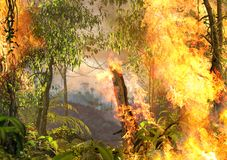 Free Tropical Amazonas Rainforest On Fire Stock Images - 157217744