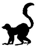 Tropical animal lemur Stock Image
