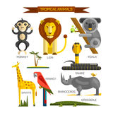 Tropical animals vector set in flat style design. Jungle birds, mammals and predators. Zoo cartoon icons collection. Lion, monkey, crocodile, snake, koala Stock Photography