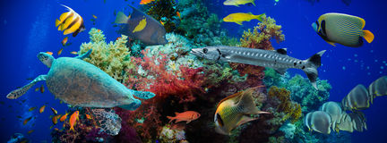 Tropical Anthias fish with net fire corals and shark Stock Photography
