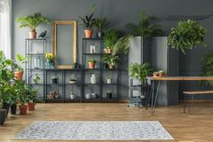 Tropical apartment interior with many plants, dark walls with mo. Lding, wooden table and bench stock image