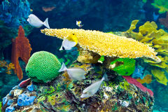 Tropical Aquarium Stock Image