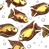 Tropical aquarium fish seamless Stock Image
