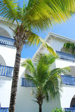 Tropical architecture. Photo of white buildings and palm trees Royalty Free Stock Photography