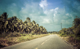 Tropical asphalt road near Natal, Brazil Royalty Free Stock Photography