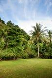 Tropical Back yard Stock Photos
