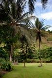 Tropical Back Yard Royalty Free Stock Photo