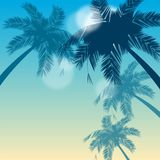 Tropical backgraund Royalty Free Stock Image