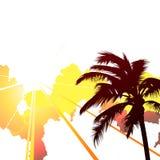 Tropical background Stock Photos
