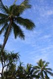 Tropical background. Idyllic tropical background with palms and blue sky, with plenty of copyspace Stock Photography