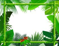 Tropical Background with Bamboo Frame Stock Photo