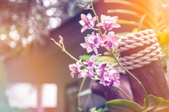 Tropical background with blossoming orchid flowers in golden sunbeams on territory of luxury hotel Stock Photo