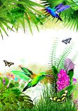 Tropical background with butterflies, hummingbirds and flowers. stock image