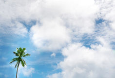 Tropical background with coconut palm trees. And perfect sky Royalty Free Stock Image