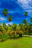 Tropical background with coconut palms Royalty Free Stock Photo