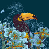 Tropical background with exotic flowers, Toucan Royalty Free Stock Images