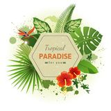 Tropical background7 Royalty Free Stock Image