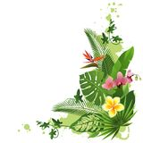 Tropical background. With flowers and plants