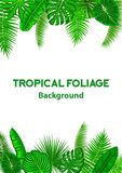 Tropical Background Frame with Exotic Jungle Leaves. Stock Photo