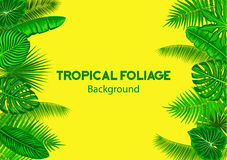 Tropical Background Frame with Exotic Jungle Leaves.Horizontal Royalty Free Stock Images