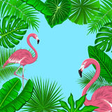 Tropical Background Frame with Exotic Jungle Leaves and Pink Flamingos. Fan, Coconut, Banana Palms, Monstera, Aralia, Bird of Paradise, Fern, Alocasia Leaves Stock Photos