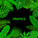 Tropical Background Frame with Exotic Tropic Leaves. Fan, Coconut, Banana Palms, Monstera, Aralia, Bird of Paradise, Fern, Alocasia Leaves Foliage Royalty Free Stock Photo
