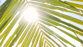 Tropical Background. Green Coconut Palm Leaves Against Blue Sky and Sun Rays. 4K. Thailand. Tropical Background. Green Coconut Palm Leaves Against Blue Sky and stock video footage