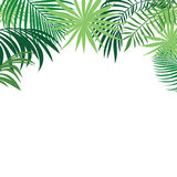 Tropical background, green palm leaves Stock Photo