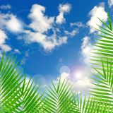 Tropical background with lens flare effect Stock Images