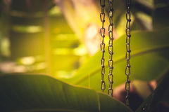 Tropical background with lush tropical foliage during tropical rain with rain drops on chains in Chinese meditation garden Stock Images
