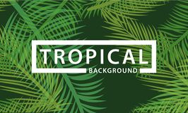 Tropical background palm and coconut leaves royalty free illustration