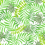 Tropical background with palm leaves. Stock Image