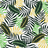 Tropical background with palm leaves. Stock Images