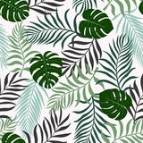 Tropical background with palm leaves. Seamless floral pattern. S Stock Images