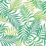 Tropical background with palm leaves. Seamless floral pattern. S. Ummer vector illustration Stock Image