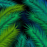 Tropical background with palm leaves. Royalty Free Stock Photos