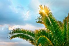 Tropical Background. Stock Photography