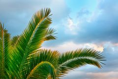 Tropical Background. Stock Image