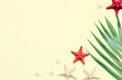 Tropical Background. Palm tree branch with starfish on light background. Travel. Royalty Free Stock Image